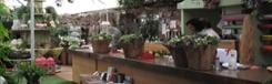 Blumen Doll, schitterende bloemenwinkel